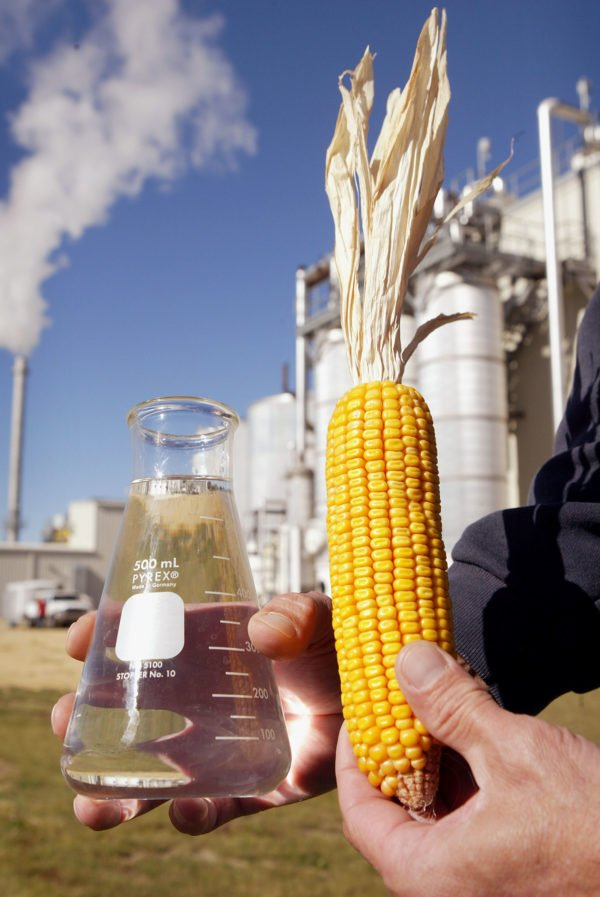benefits of biodiesel green future essay Essay about benefits of biodiesel alternative fuel sources should take the place of fossil fuels because it will create a less contaminated environment such as using biofuel instead of conventional diesel.
