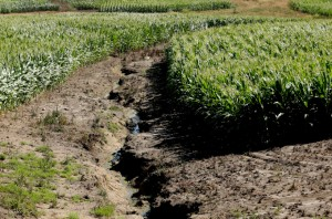 Soil degradation is another cause of the production of corn for corn-based ethanol fuel.
