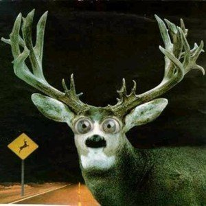 be aware of wildlife crossing warning signs